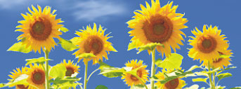 Экологичная защита растений от болезней